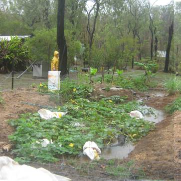 View 1 - Jan 13 The white bags in the centre are shrouding pumpkins.