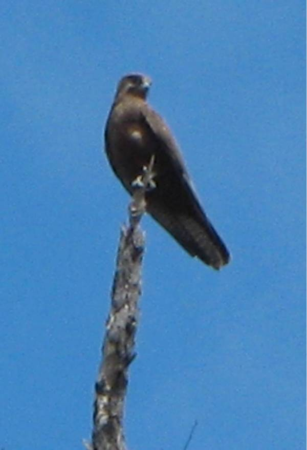 Bird of Prey, on the highest point.
