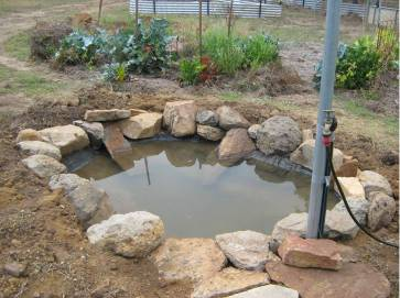 New Pond - Frog Heaven