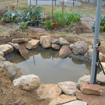 New Pond - Frog Heaven